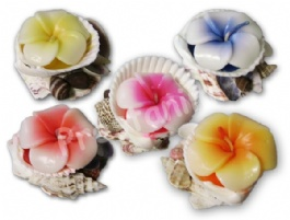26341_bougies-sur-coquille-fleur-hibiscus