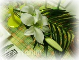 29892_fleur-de-lys-blanc-effet-naturel