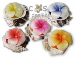 15661_bougies-sur-coquille-fleur-hibiscus