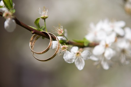 echange-alliances-mariage
